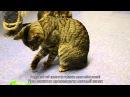Игрушка Мятная палочка для кошек от Petstages