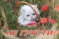 НЕ ГРУСТИ)