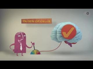 Миф о работе мозга