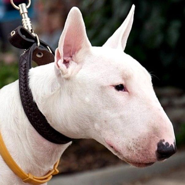Как перевоспитать собаку: rк вопросу о нежелательном поведении IwLcl24EzrA