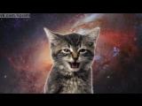 Коты в космосе мяукают песню группы