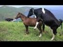 Смешной секс животных 2015 часть 13. Смешной чудо - конь.