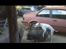 Смешной секс животных 2015 часть 12.  Собака и обезьяна и другие.