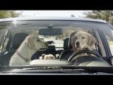 Subaru Dog Tested | Subaru Commercial | In the Dog House
