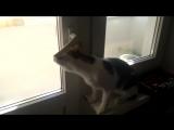 Мой кот хочет погулять на балконе и пытается открыть дверь