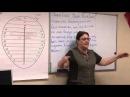 Надежда Токарева О матриархате и женских обережных энергиях