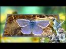 Вальс бабочек. Красивая музыка, красивые бабочки