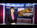 За жорсткае абыходжанне з жывёламі па крымінальным артыкуле асудзілі жыхароў Магілёўшчыны