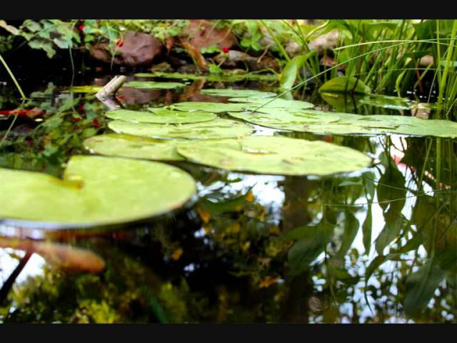 Muzyka Relaksacyjna Woda Żabki Świerszcze 100 Naturalne