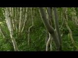 Мы даже представления не имеем, что такое лес для Земли и для человека.
