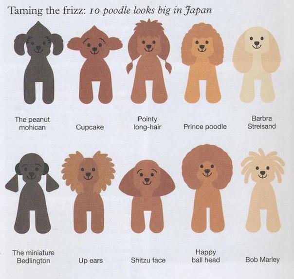 Японский стиль пуделя