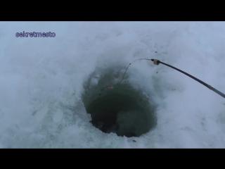 Увлекательная ловля  окуня на зимней рыбалке на  чертика