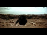 Ape. '2001 A Space Odyssey'  Dawn of man