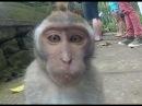 Смешные обезьяны. Хорошего ВСЕМ дня
