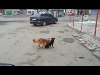 Прикольные Приколы, смешное видео, сборник приколов, приколы с животными, Prikoly 2014, ghbrjks 2013