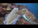 Scuba Diving in The Similan Islands Koh Tachai and Richelieu Rock
