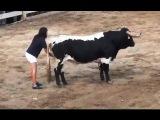Почему бык не трогает девушку - Смотреть
