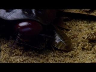 Микромонстры с Дэвидом Аттенборо (эпизод 04.Размножение)