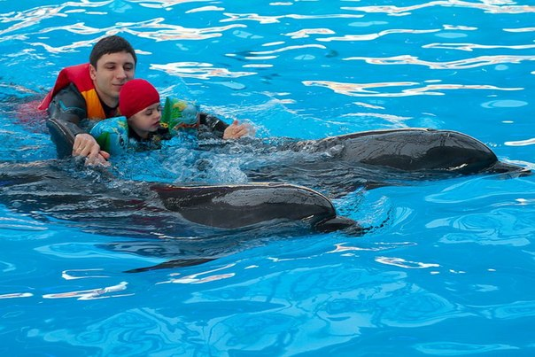 Дельфинотерапия - что это такое?