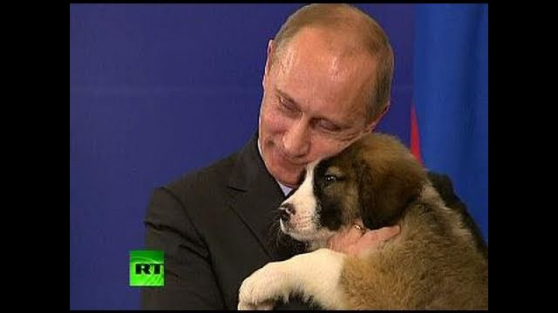 A Dog's Heart Pet lover Putin needs name for fluffy puppy
