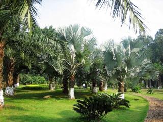 Репортаж о людях, продвигающих строительство одного пояса, одного пути--- Пальмовый сад для Индонезии