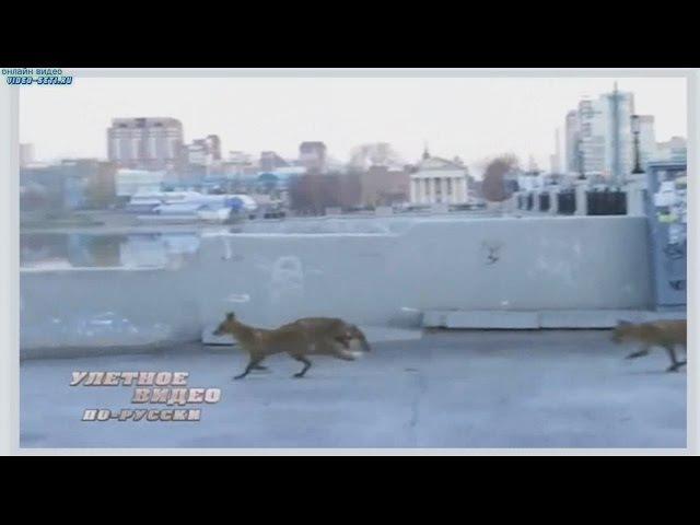 Улетное видео по русски! 9 выпуск 1 сезон (HD)