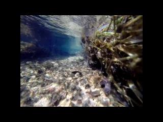 Подводные съемки зимой. Ручей Эммонс. Штат Винсконсин. США