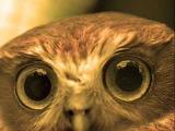 The Death Owl (Смерть Совы из