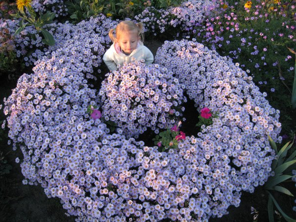 Мой любимый огород))) 6diwaIRRO3M