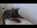 Котята ищут дом Пушистая девочка,гладкошерстный мальчик! срочнотел 89509561649 Юлия.