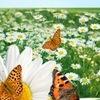 Aubrey Organics и Eco-Max - 100% натурально