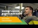 Круговая тренировка Наращивание мышечной массы Energy Life NL