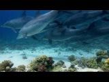 Дельфины в дикой природе. Секс, игры, общение