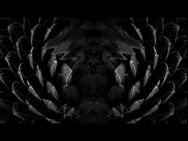 IYU | Bivouac