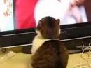 Gato Dramatico