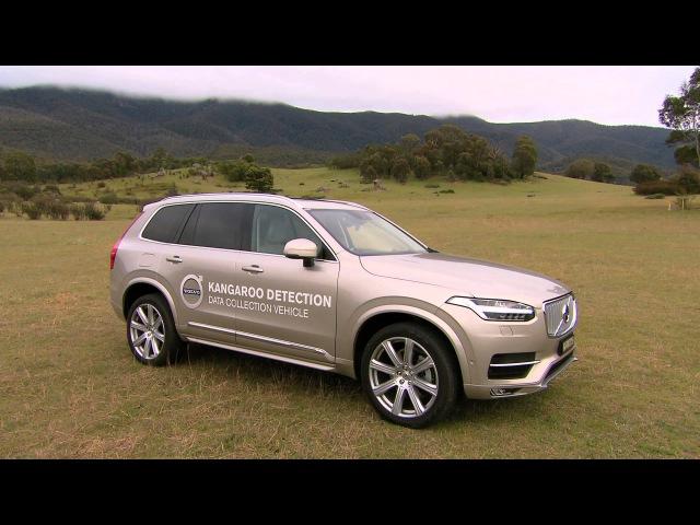 Volvo Kangaroo Detection System for Australia