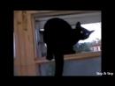 Кот лает пока хозяин не видит