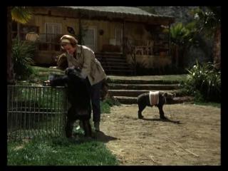 Дактари. 15-я серия - Джуди и гиена