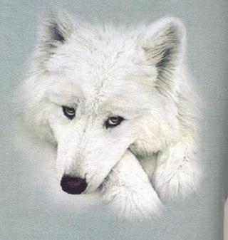 Красивые фотки на аву и классные ...: vk.com/albums-79198837