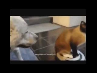 Просто Охренеть, вот это да! Youtube.ru Приколы С Животными