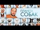Планета Собак 1 Выпуск - Хортая б�