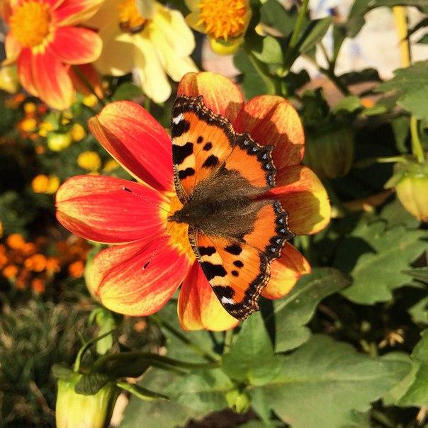Осенняя бабочка 🌼