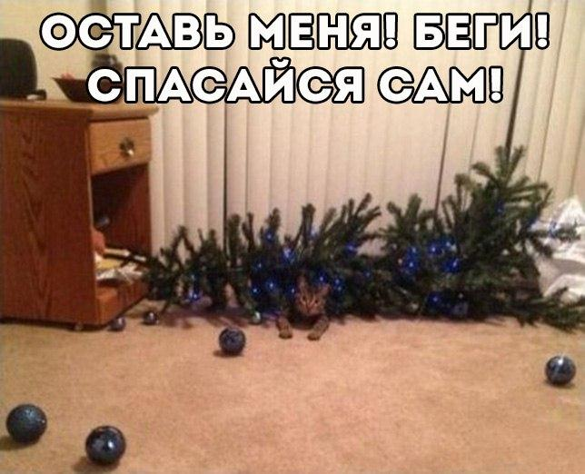 http://cs624322.vk.me/v624322698/10719/ENpmBHIkprY.jpg