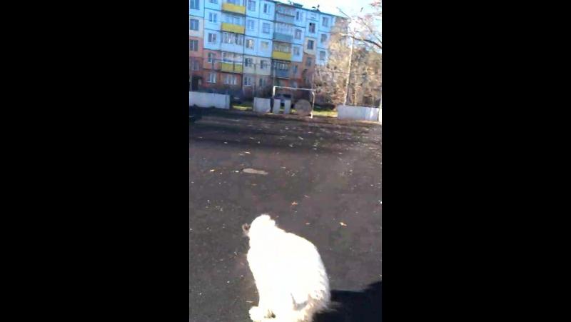 Собака-бесяка