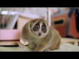Лори — самые милые животные в мире!