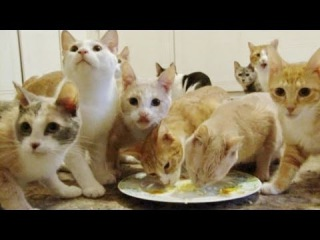 Сумасшедшая кошатница. Более 100 кошек жило в доме у женщины!