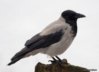 Приметы о мертвых птицах, если она ударилась в окно и