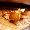 Alchemia - необычные ювелирные украшения