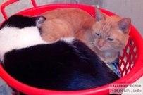 25 октября 2014  -  Коты как Инь и Ян