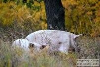 02 октября 2014 - Самарская область: Гурьев овраг